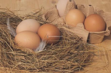 Docena de huevos ecológicos tamaño XL